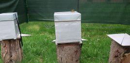 Les abeilles de la busette